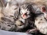 gatta con gatto